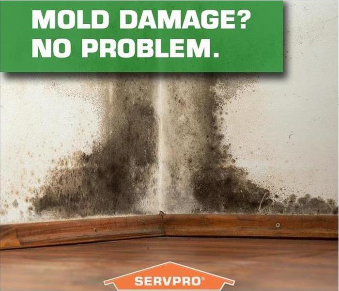 Mold Remediation Managing Mold in Brentwood Tennessee