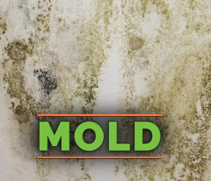 Mold growth on a white wall - Text on image that says MOLD